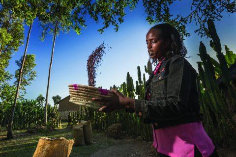 Farmer with a bean crop in Hangachafa Village, southern Ethiopia