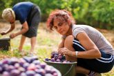 Armenia has a long tradition in the fruit canning industry