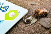 Bee Saviour Card