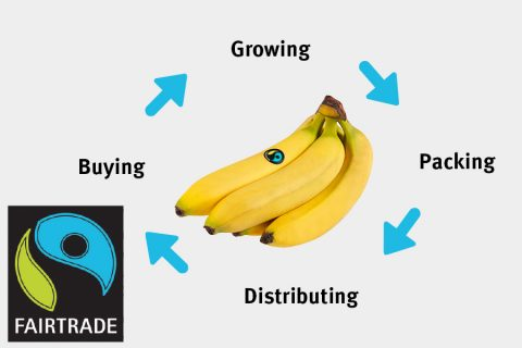 From farm to fruit bowl - the journey of a Fairtrade banana