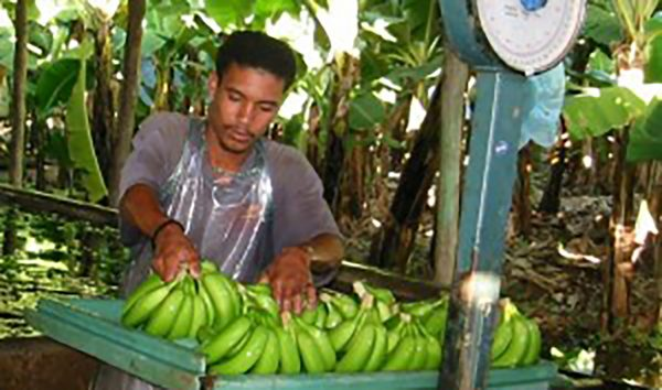 It is difficult to monitor casual work in small producer organisations
