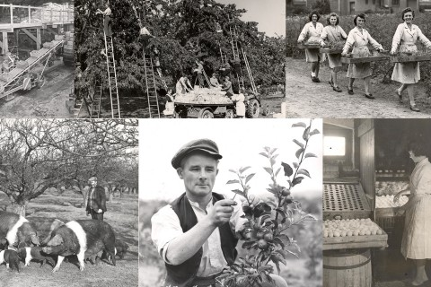 Clockwise from top left: Apple packing in Cockayne Hatley; CWS Fruit Farm, Hereford; Seed testing ground, Derby; Egg testing; Apple picking; Caleb Cheshire, champion pigman, at CWS Coldham