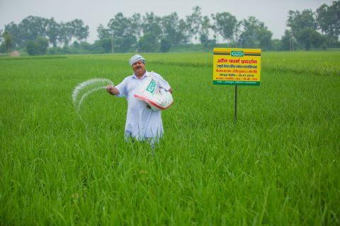 Iffco farmer