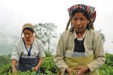 Nepali tea pickers Pavel Svoboda