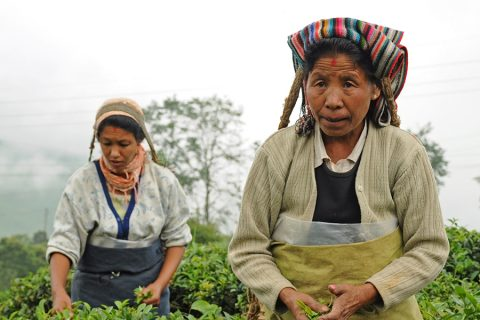 Nepali tea pickers Pavel Svoboda