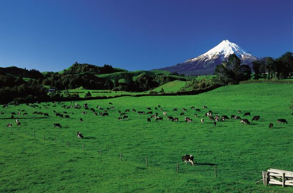 New Zealand's co-ops bring in NZD$41bn a year. The World Cooperative Monitor 2015 puts the largest by turnover as being agricultural co-op Fonterra. [photo: Fonterra Cooperative Group]