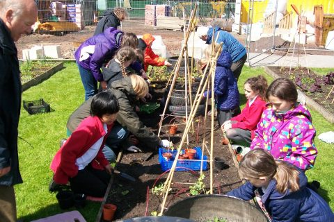 School gardening project at Stockbridge Primary School. Scotmid's grant will enable 1,000 children from the Edinburgh area to learn about looking after plants and vegetables