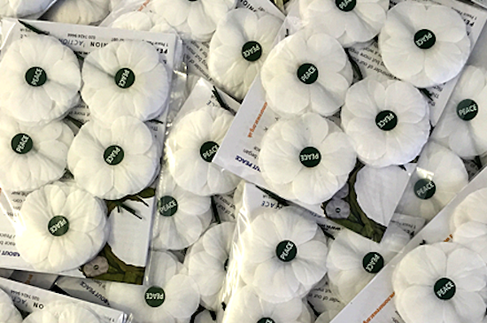 White Poppies Tell The Story Of The Alternative Remembrance Day Co
