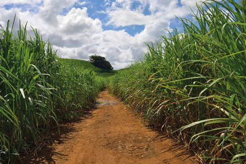 In Africa, some sugar cane PPPs have had a negative effect
