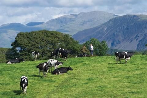 Thornbank farm, Cumbria, which produces milk for First Milk
