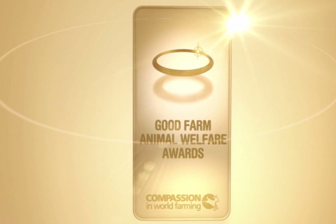 Coop Switzerland won the award for its initiative to implement a group housing system for rabbits, as an alternative to caged production. [image: Compassion in World Farming]