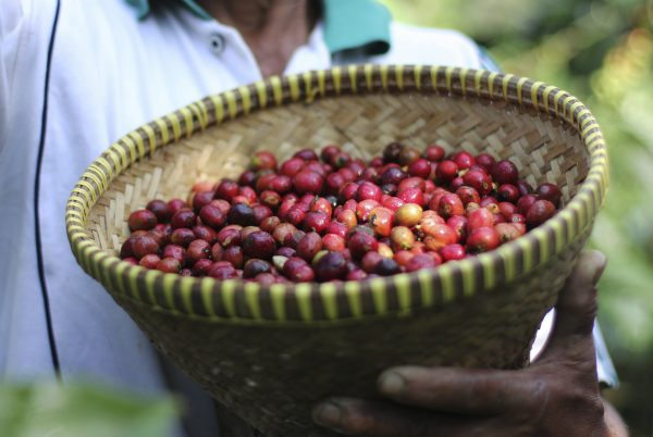 Coffee enterprises are among the early adopters of the initiative