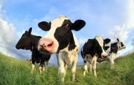 Glanbia Co-operative, based in County Waterford, Ireland, is supporting members ahead of what looks like being a difficult year for the agriculture sector