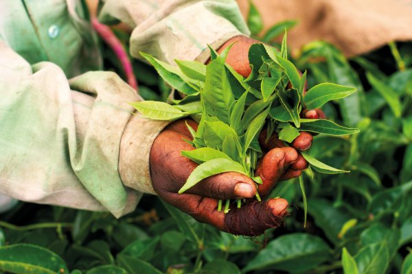 Tea farmers are among those who will benefit from fairer trade