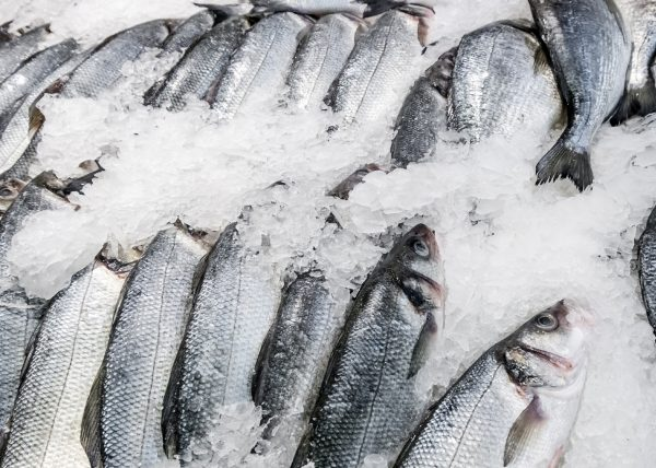 Fish producer organisations: why better regulation is a fishy business