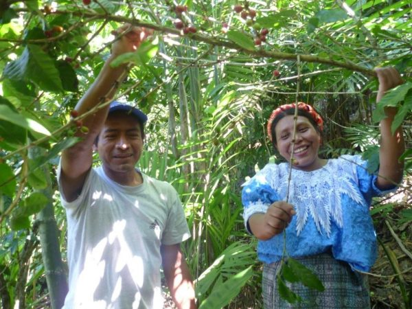 42% of co-operatives in Guatemala are involved in farming