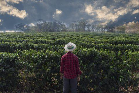 Photo of a coffee farmer