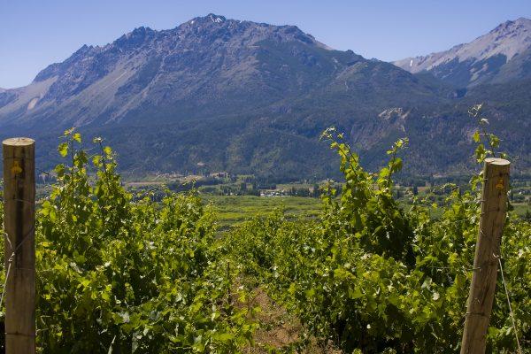 Co-operatives produce 60% of the world's wine