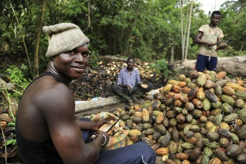 Nestle has helped cocoa farmers in Cote d'Ivoire to produce better yields