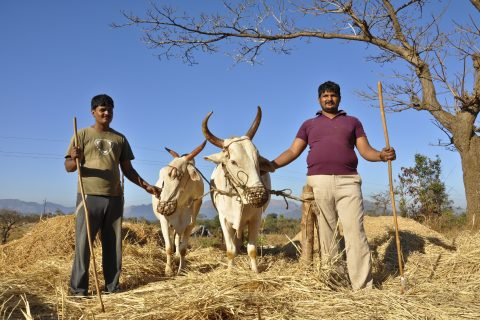 India is the world's biggest producer and consumer of milk