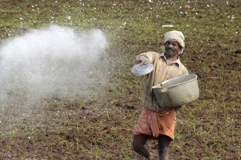 A farm worker throws fertiliser in the fields of Kuttanad in Alleppey, Kerala, India.