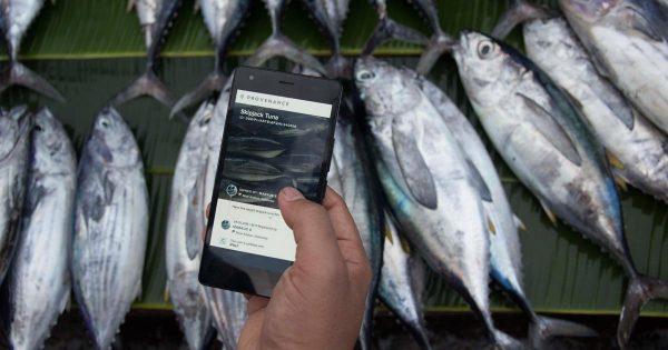 meta-tuna-tracking-3a383d0021359291ea3b631f1fd671dbd4d71ae3d39f0716aa9db62328a8c763