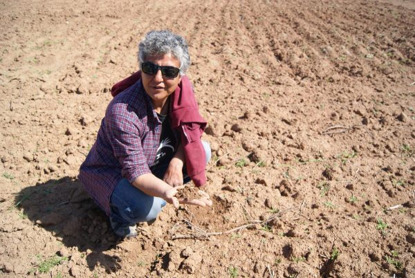 """Bîstanên Rojava (Farmers of Rojava, also referred to as """"the greenhouse project""""), was set up by Nahide [photo: Jo Magpie]"""