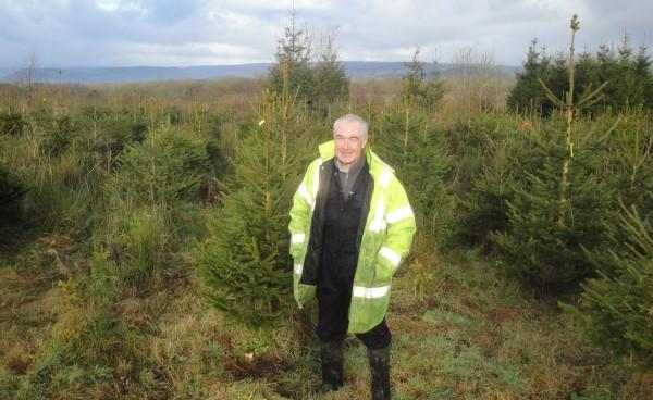 Roger Hunt on his Christmas tree farm near Carmarthen