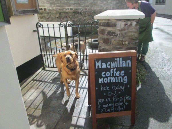 The shop is a favourite among pets, too! (c) High Bickington Community Shop