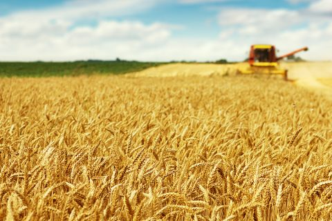 Momagri think tank addresses issues of agricultural prices volatility